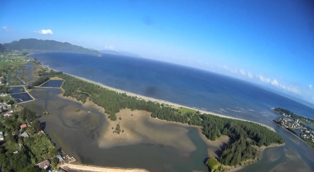 Tanaman Pesisir Pantai